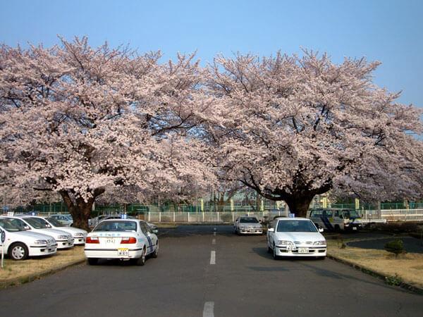 【学生】エコノミー普通車AT…自動二輪免許所持(安心パック付)(写真はイメージです)
