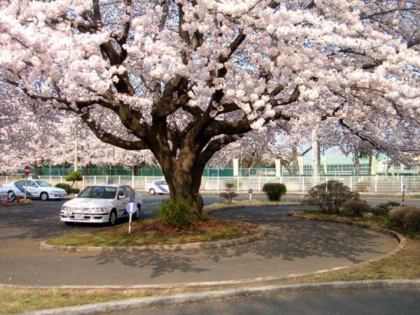 【一般】エコノミー普通車AT…自動二輪免許所持(安心パック付)(写真はイメージです)