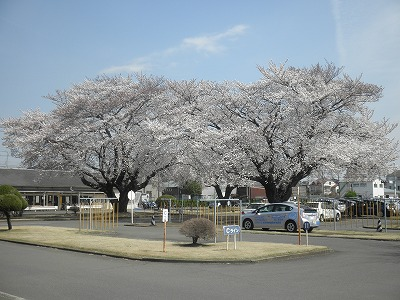【春のキャンペーン】普通車MT…所持免許なし(写真はイメージです)