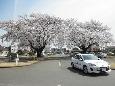 【春のキャンペーン】普通車MT…二輪免許所持(写真はイメージです)